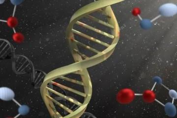 雄性比雌性寿命短是因为Y染色体有毒